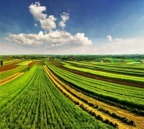 Италия также располагает современным развитым сельским хозяйством